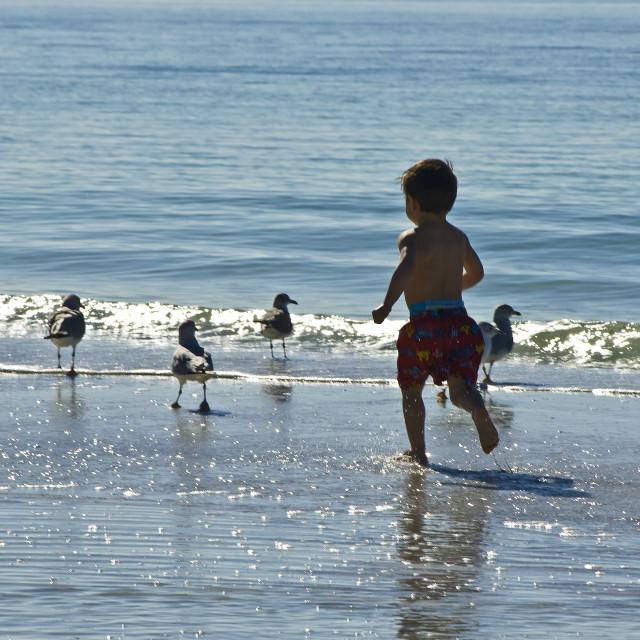 """Boy Chasing Seagulls"" stock image"