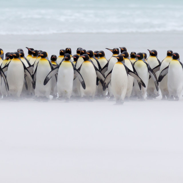 """Just a view penguins"" stock image"