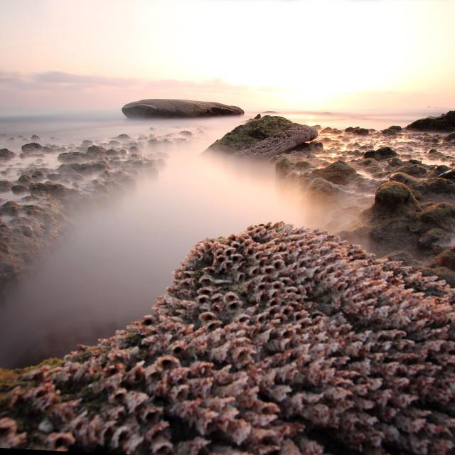 """""""Socotra Sunrise"""" stock image"""