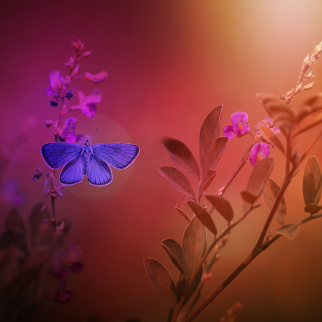 """Vintage photo of butterfly and pink tree flower"" stock image"