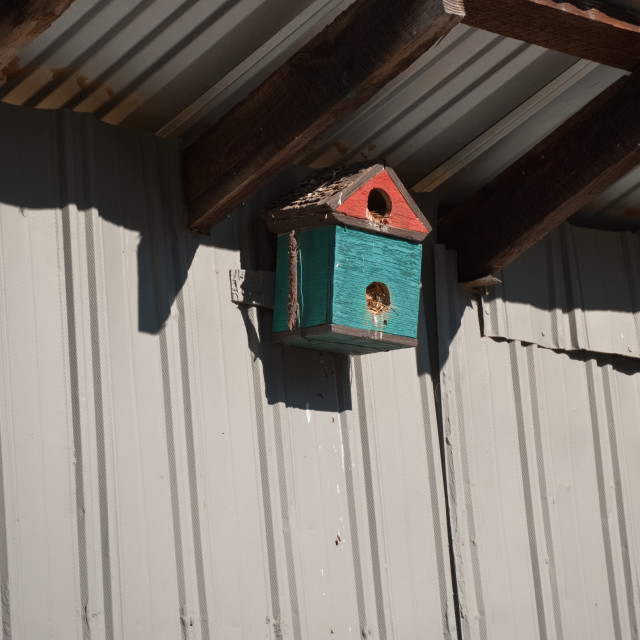 """Birdfeeder"" stock image"