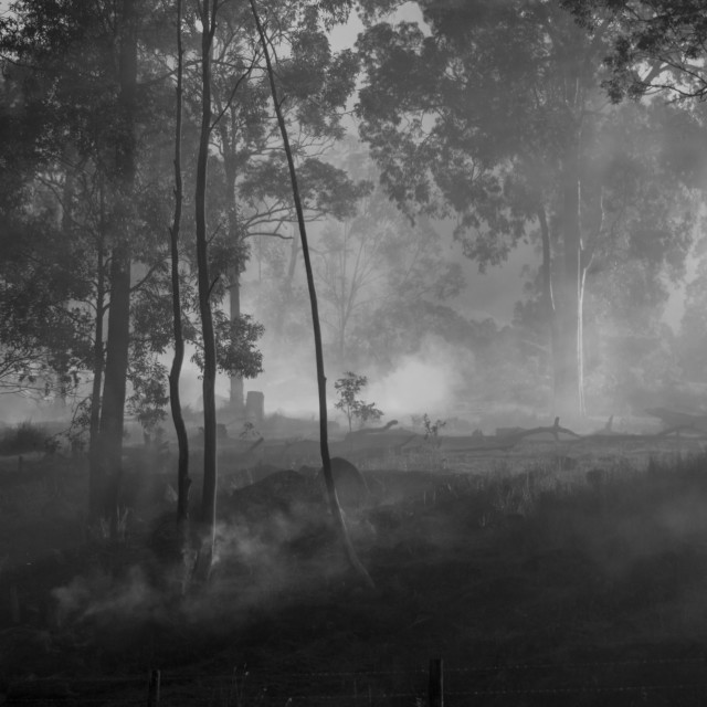 """smoke thtu the trees"" stock image"