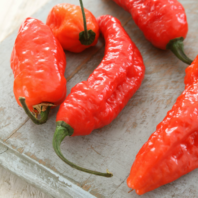 """chillie naga jolokia peppers"" stock image"