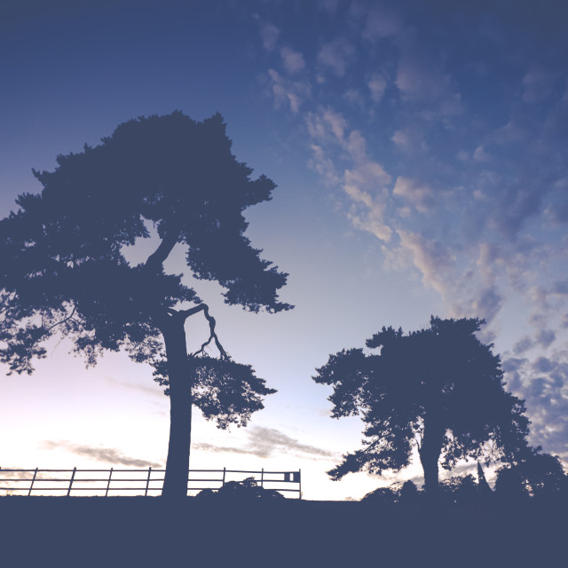 """Tree Silhouette"" stock image"