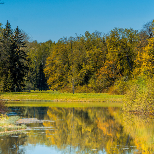 """""""Autumn forest on the bank of the pond"""" stock image"""
