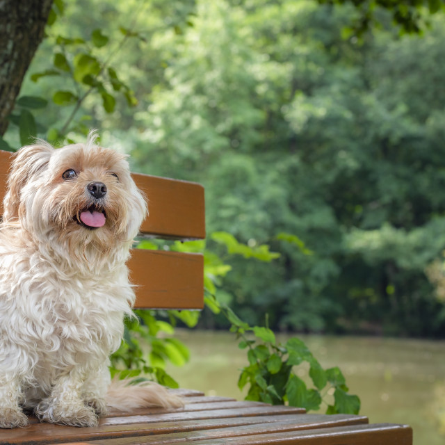 """Adorable small dog sitting on a bench in nature"" stock image"