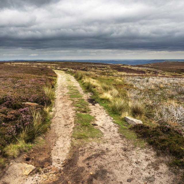 """Millennium Way on Burley Moor"" stock image"