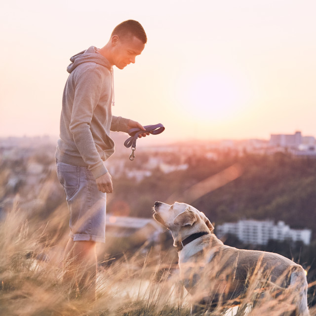"""Morning walk with dog"" stock image"