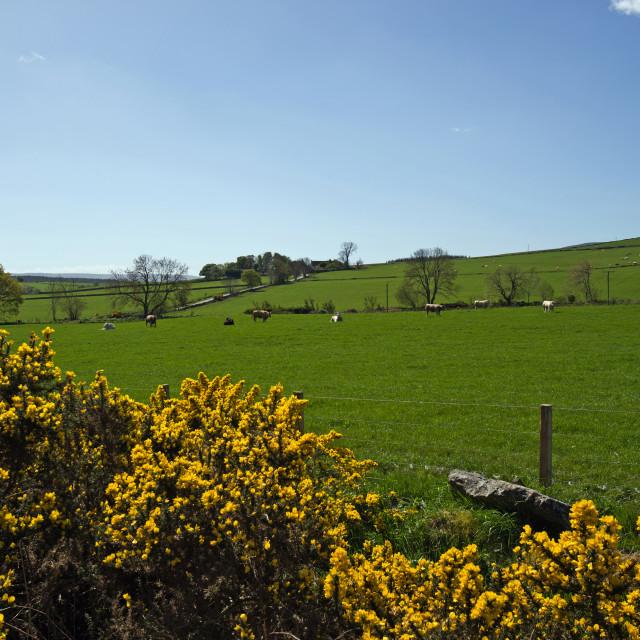 """""""Todlachie Farmland"""" stock image"""