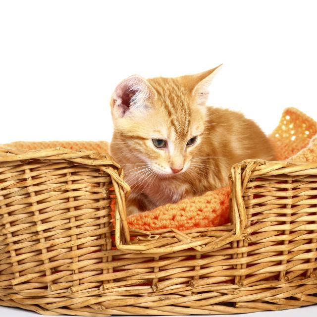 """""""Ginger mackerel tabby kitten"""" stock image"""