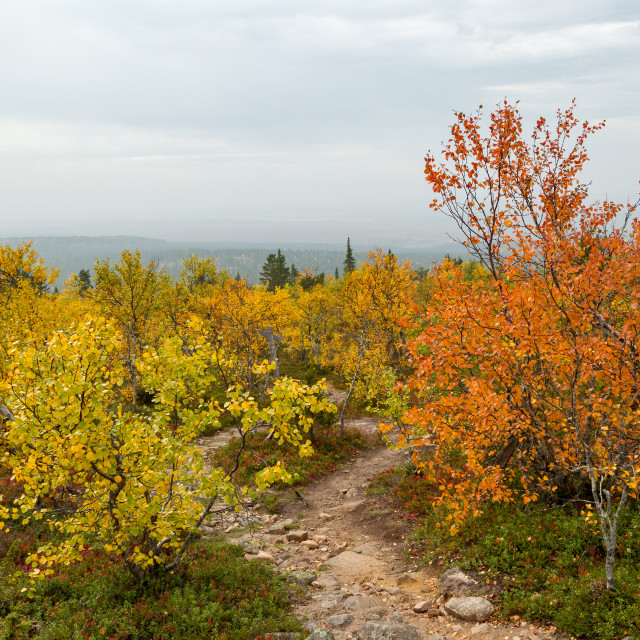 """""""Fall colors on a hazy day"""" stock image"""