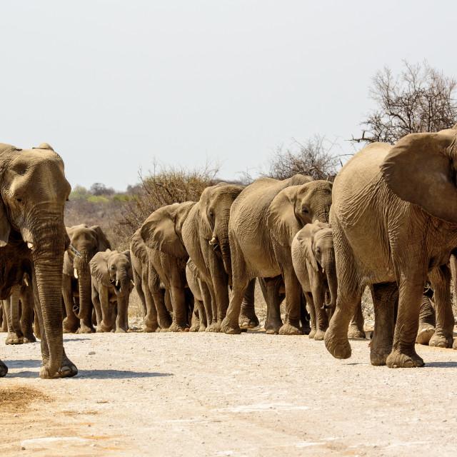 """Beware Elephants approaching"" stock image"