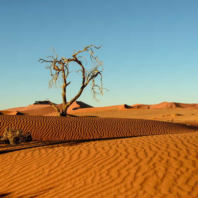 """""""Shifting sands of the Namib"""" stock image"""