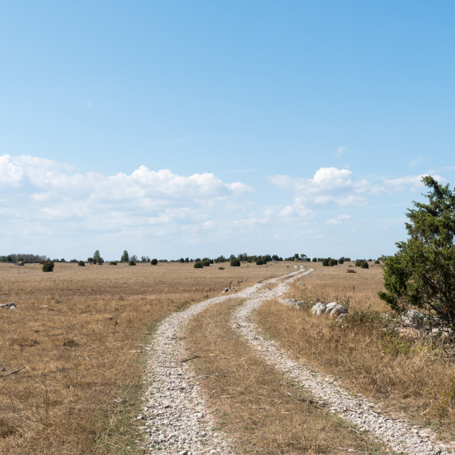 """""""Winding dirt road in a dry grassland"""" stock image"""