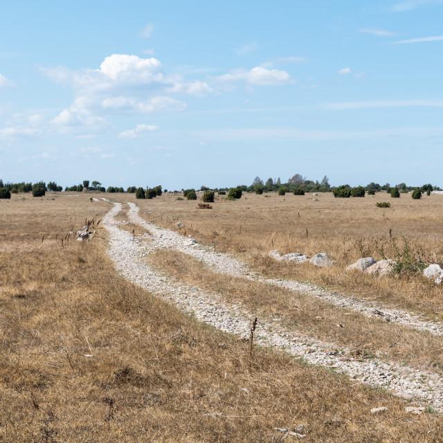 """""""Dirt road through a dry grassland"""" stock image"""