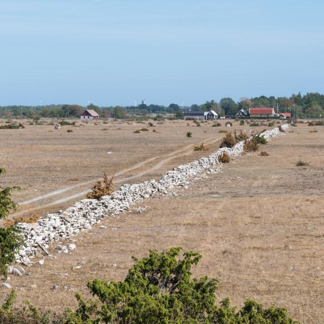 """Dried grassland by summer season"" stock image"