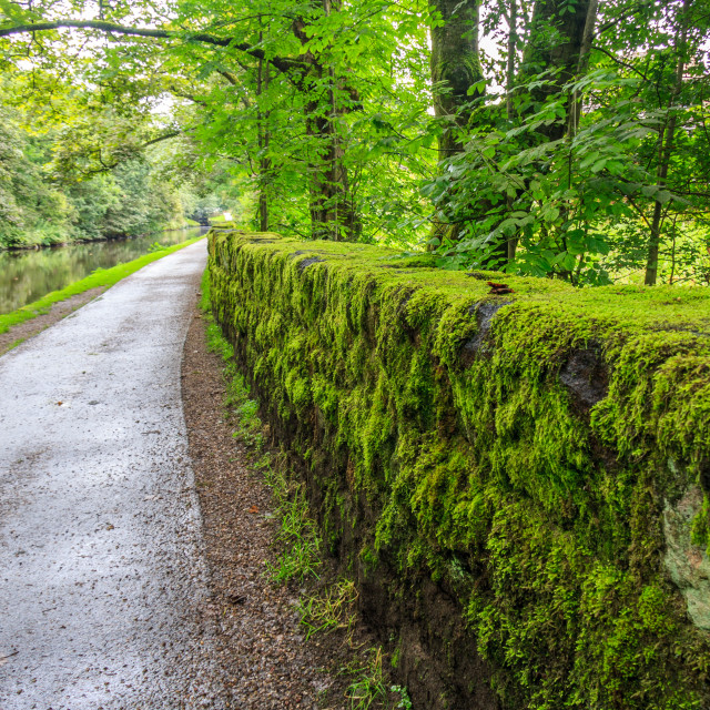 """Towpath and green moss growing on stone wall"" stock image"