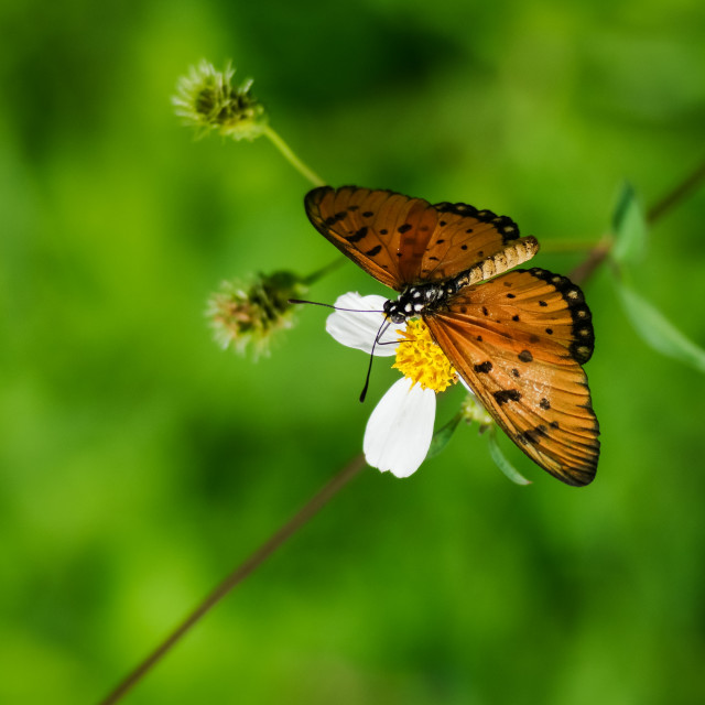 """Beautiful butterfly on green grass with clear nature background"" stock image"