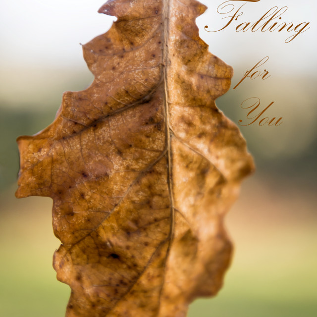 """""""Falling for you"""" stock image"""