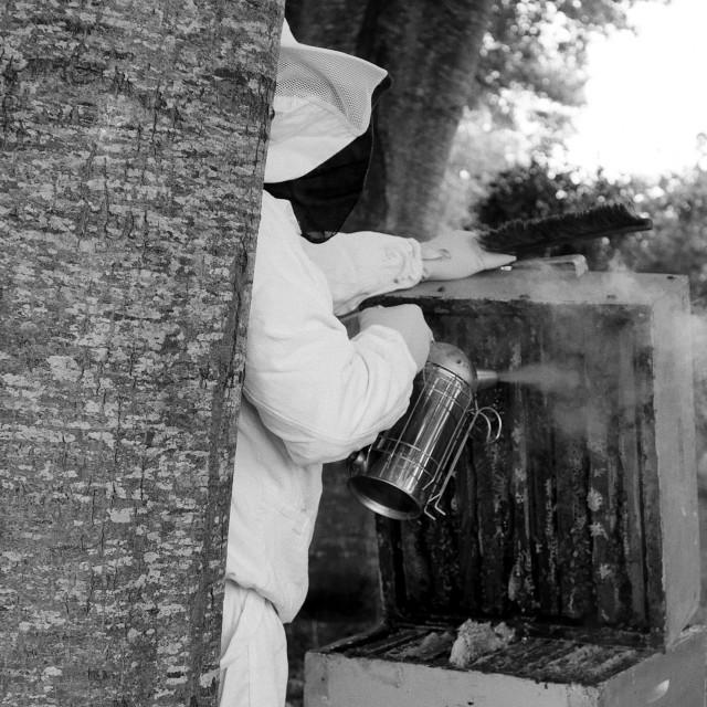 """""""The beekeeper"""" stock image"""