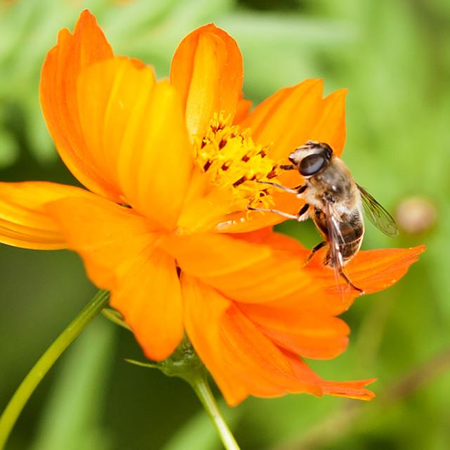 """Pollen hunter"" stock image"
