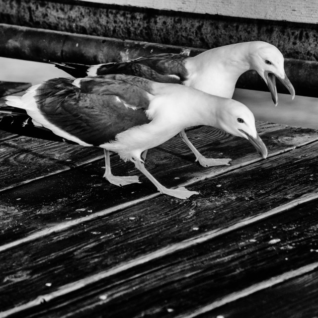 """Seagulls on a pier"" stock image"