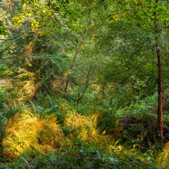 """First Glimpse Of Autumn"" stock image"