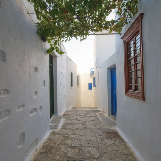 """""""Street with vine between houses at the folk Chora of Amorgos"""" stock image"""