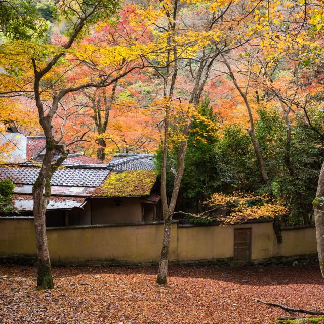 """""""Japan house with autumn tree, Arashiyama"""" stock image"""