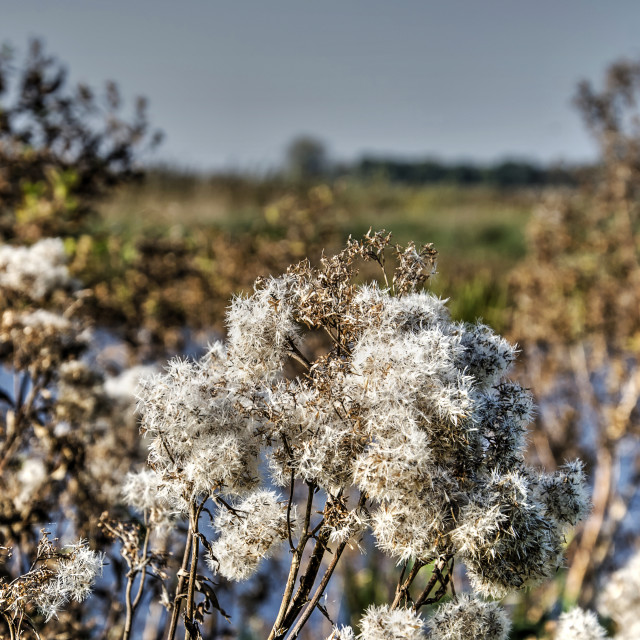 """Fluffy autumn scene"" stock image"