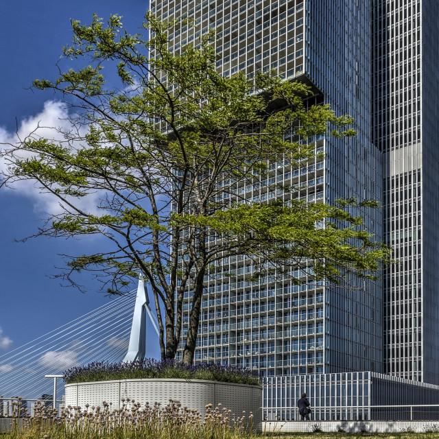 """Vertical city De Rotterdam"" stock image"