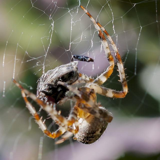 """""""Spider's dinner"""" stock image"""