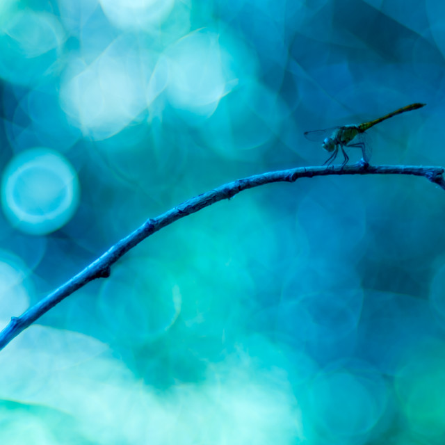 """A dragonfly with green/blueish bubble bokeh in background"" stock image"