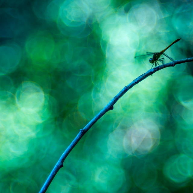 """A dragonfly with green bubble bokeh in background"" stock image"