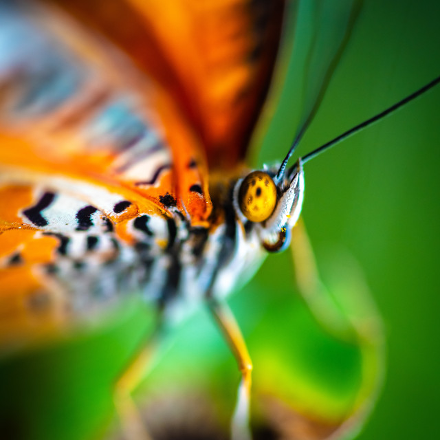 """Butterfly Colour"" stock image"
