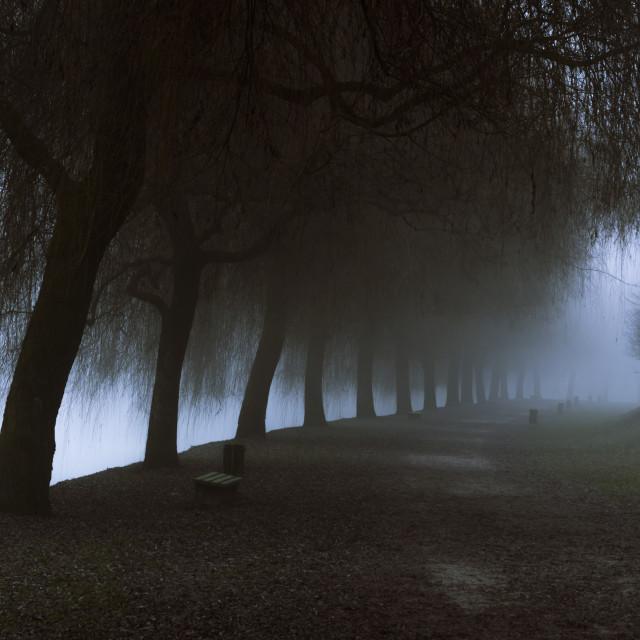 """Misty park alley leading to dense fog"" stock image"