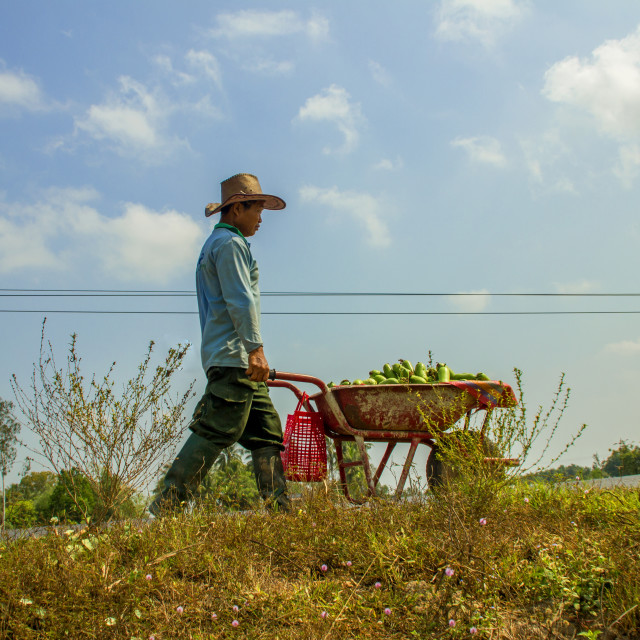 """agriculture in vietnam"" stock image"