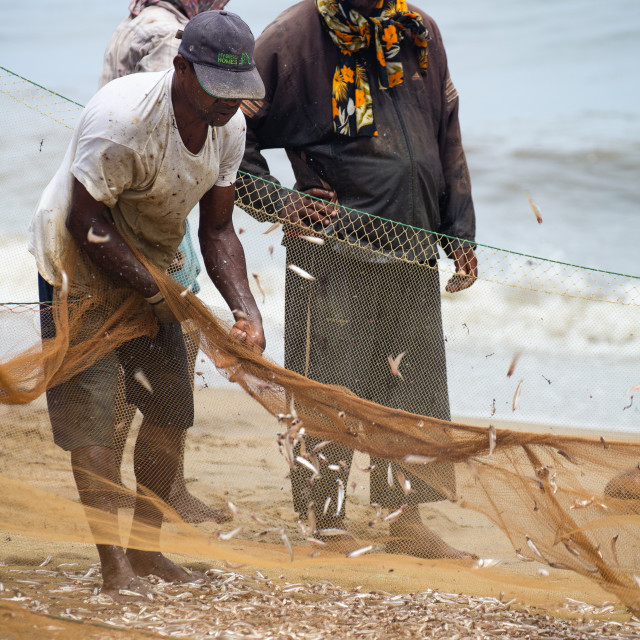 """shaking out the catch"" stock image"