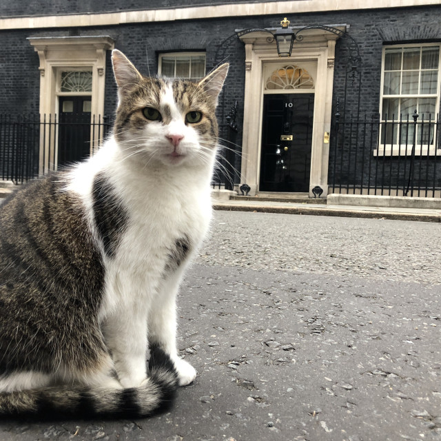 """""""Larry the Downing Street Cat"""" stock image"""