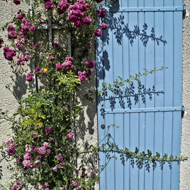 """Blue door and roses - Provence"" stock image"