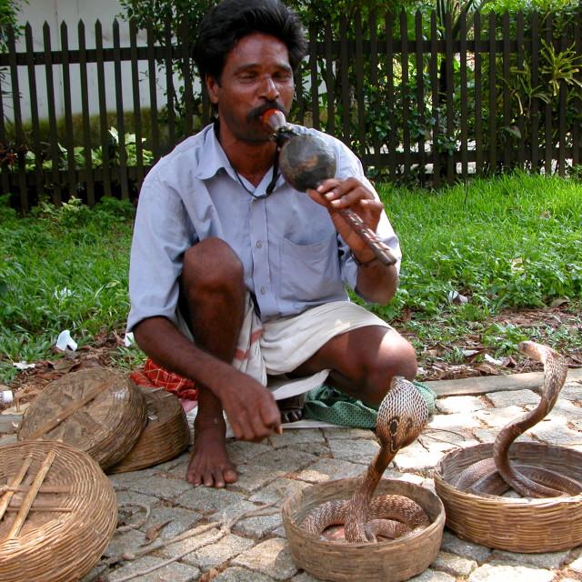 """""""Snake charmer"""" stock image"""