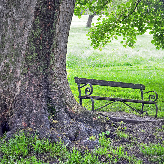 """""""bench under a tree"""" stock image"""