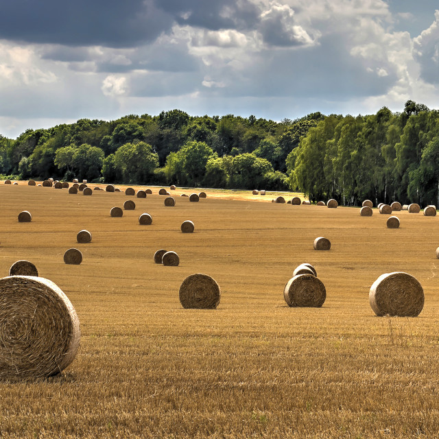 """""""Bales of straw in central France"""" stock image"""