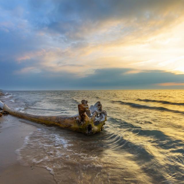 """Driftwood on a Lake Huron beach"" stock image"