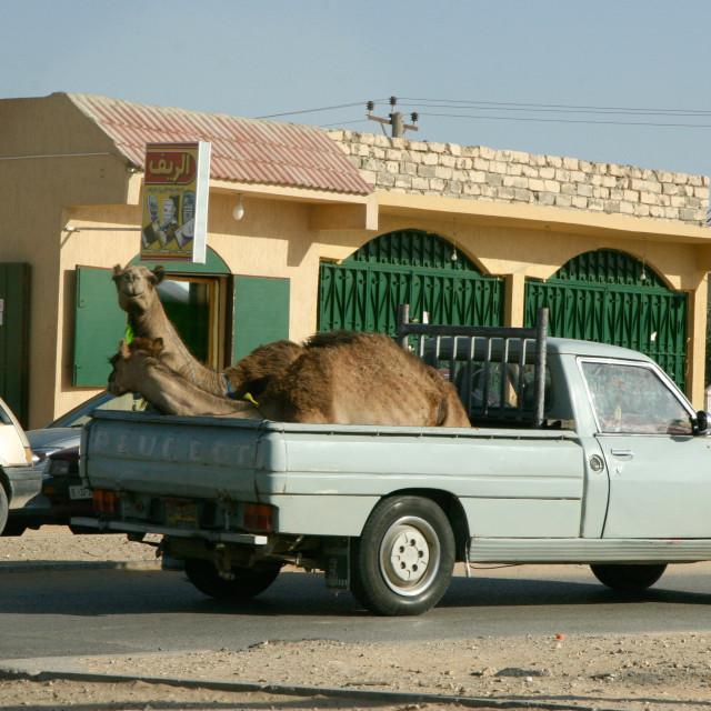 """Camel ride"" stock image"