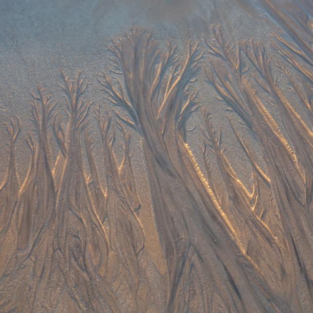 """Tidal treescape"" stock image"
