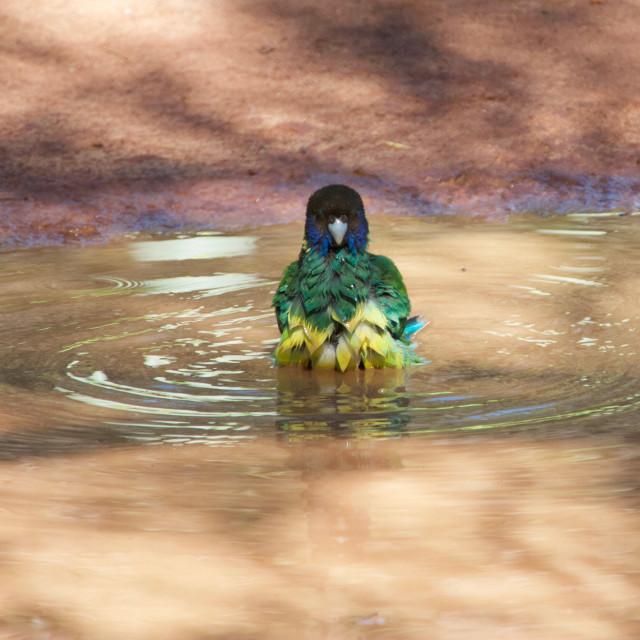 """""""Birdbath"""" stock image"""