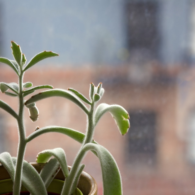 """""""Small Potted Succulent Plant in Front of a Glass Window in a Home, With View of the Neighborhood"""" stock image"""