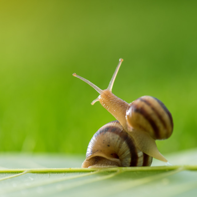 """""""Beautiful lovely snail in grass with morning dew."""" stock image"""