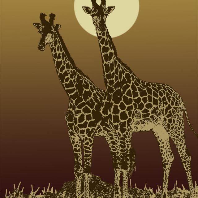 """Giraffe sunset"" stock image"